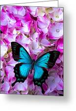 Blue Butterfly On Pink Hydrangea Greeting Card