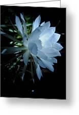 Blue Cereus Greeting Card