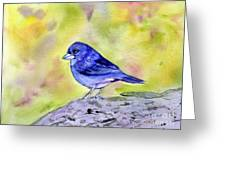 Blue Chaffinch Greeting Card