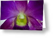 Blue Charm X Aridang Blue Orchid - 2 Greeting Card