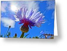 Blue Cornflower With Blue Sky Greeting Card