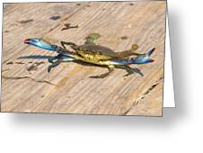 Blue Crab On Dock Assateague Island Md Greeting Card
