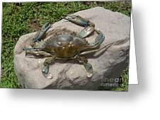 Blue Crab On The Rock Greeting Card