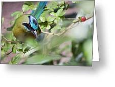 Blue-crowned Motmot Greeting Card by Rebecca Sherman