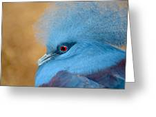 Blue Crowned Pigeon Greeting Card