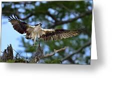 Blue Cypress Landing Greeting Card