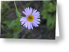 Blue Daisy Greeting Card