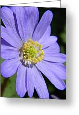 Blue Daisy Up Close Greeting Card