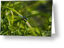 Blue Damsel Dragon Fly Greeting Card