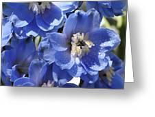 Blue Delphinium 9655 Greeting Card