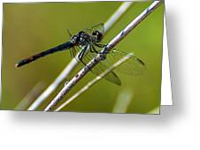 Blue Dragonfly 3 Greeting Card