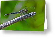 Blue Dragonfly 5 Greeting Card