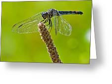 Blue Dragonfly 6 Greeting Card