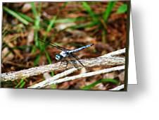 Blue Dragonfly Beauty Greeting Card by Ella Char