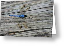 Blue Dragonfly Greeting Card