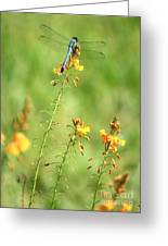 Blue Dragonfly In The Flower Garden Greeting Card