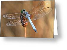 Blue Dragonfly Square Greeting Card