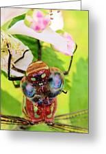 Blue Eyed Bandits Greeting Card