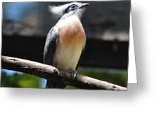Blue Eyed Bird Greeting Card