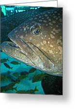 Blue-eyed Grouper Fish Greeting Card