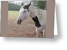 Medicine Hat Horse Greeting Card