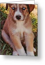 Blue Eyed Pup Greeting Card