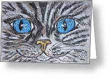 Blue Eyed Stripped Cat Greeting Card