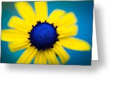 Blue Eyed Susan Greeting Card