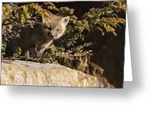 Blue Eyes Baby Fox Greeting Card