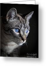 Blue Eyes Greeting Card