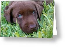 Blue Eyes Dreaming Greeting Card