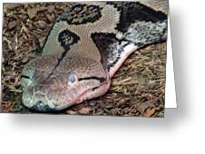 Blue Eyes Snake Greeting Card
