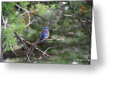 Blue Feathers Greeting Card
