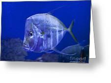 Blue Fish   #4990 Greeting Card