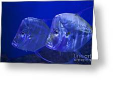 Blue Fish   #4991 Greeting Card