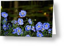 Blue Flax By The Pond Greeting Card