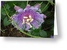 Blue Flower Blooming Greeting Card