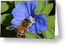 Blue Flower Bumblebee Greeting Card