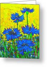 Blue Flowers - Wild Cornflowers In Sunlight  Greeting Card