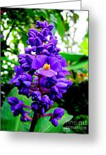 Blue Ginger Greeting Card