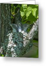 Blue-gray Gnatcatcher Nestlings Dsb253 Greeting Card