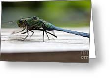 Blue Green Darter Greeting Card