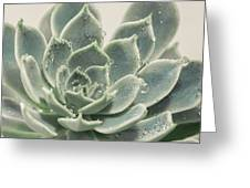 Blue Green Succulent Greeting Card