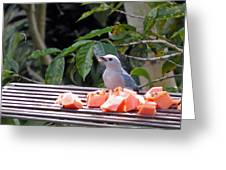 Blue-grey Tanager 1 Greeting Card