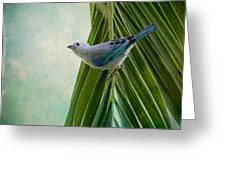 Blue Grey Tanager On A Palm Tree Greeting Card