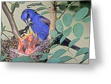 Blue Grosbeak Guiraca Caerulea Greeting Card