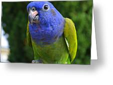 Blue Headed Pionus Parrot Greeting Card