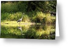 Blue Heron 01 Greeting Card