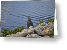 Blue Heron 1 Greeting Card