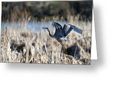 Blue Heron 1 Greeting Card by Roger Snyder